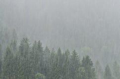 Las z drzewami w srogiej podeszczowej prysznic zdjęcia stock
