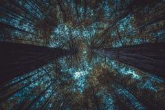 Las z niebieskim niebem ledwo widocznym spod spodu zdjęcia stock