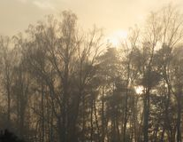 Las z ranku słońcem Obraz Royalty Free