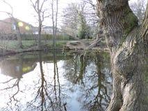 Las z stawu krajobrazem Fotografia Royalty Free