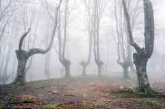 Las z strasznymi drzewami Zdjęcie Royalty Free