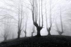 Las z strasznymi drzewami Obraz Stock