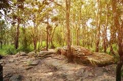 Las z wschodem słońca Fotografia Stock