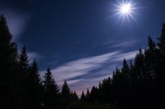 Las zaświeca księżyc fotografia royalty free
