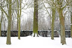 Las zakrywający z śniegiem w zimie (Francja Europa) Obrazy Royalty Free