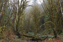 Las zakrywający w mech Zdjęcia Royalty Free