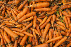 Las zanahorias Imagenes de archivo