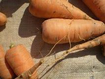 Las zanahorias en el despido de 3 Fotos de archivo libres de regalías