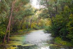 Las zatoczki spływanie pod łukami drzewa Obrazy Royalty Free