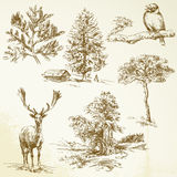 Las, zwierzęta, natura Fotografia Royalty Free