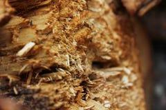 Lascas de madeira Imagem de Stock