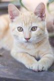 Lasci il gattino sulla parte anteriore. fotografia stock libera da diritti