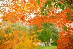 Lasci nell'autunno Fotografia Stock Libera da Diritti