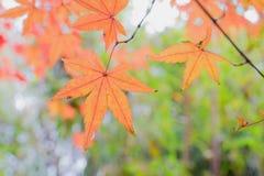 Lasci nell'autunno Immagini Stock