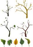 lascia gli alberi Fotografia Stock