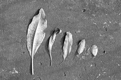 Lascia grande a piccolo sul pavimento del cemento Fotografia Stock Libera da Diritti