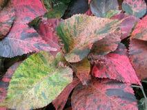 Lascia il primo piano ai giardini botanici nazionali di Dublino Immagini Stock