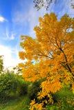lascia l'albero arancione fotografia stock libera da diritti
