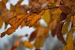 Lascia l'autunno 2017 del serie Immagine Stock