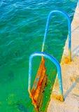 Lascia la nuotata Immagine Stock Libera da Diritti