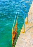 Lascia la nuotata Immagini Stock