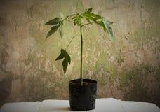 Lascia la pianta un albero Fotografie Stock