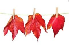 Lascia la priorità bassa di autunno Fotografia Stock Libera da Diritti