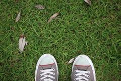 Lascia per andare verde Fotografie Stock Libere da Diritti