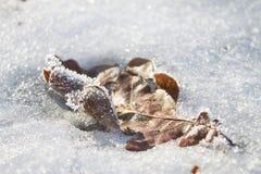 Lasciare di Brown in neve Immagine Stock Libera da Diritti
