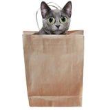 Lasciare il gatto dal sacchetto Immagine Stock Libera da Diritti