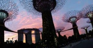 Laser-show av Singapore Marina Bay Sand och trädgård vid fjärden royaltyfria bilder