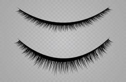 Lashes  on transparent background. False eyelashes set. Vector illustration.  Royalty Free Stock Photography
