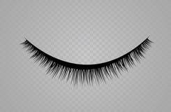 Lashes  on transparent background. False eyelashes set. Vector illustration Stock Photography