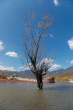 Lashi Lake. This is a tree cross with Lashi lake Stock Photos