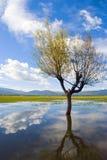 Lashihai Lake Arkivfoto