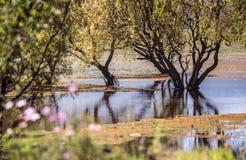 Lashihai Lake royaltyfri fotografi