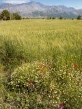 Lasithi-Hochebene in Kreta, Griechenland Lizenzfreie Stockbilder