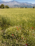 Lasithi Plateau in Crete, Greece Royalty Free Stock Images