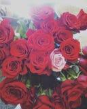 Laska de la CZ del cechrose de las rosas del amor imágenes de archivo libres de regalías