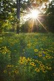 Lasowa łąka Zdjęcie Royalty Free