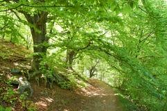 lasowa ścieżka obrazy royalty free
