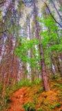 Lasowa ścieżka 01 Obrazy Royalty Free