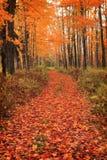 lasowa ścieżka obraz royalty free