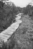lasowa ścieżka Zdjęcia Stock