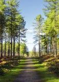 Lasowa ścieżka Fotografia Royalty Free