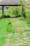 Lasowa ścieżka. Fotografia Stock