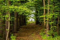 Lasowa ścieżka Boskovice Obrazy Stock