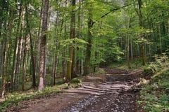 Lasowa ścieżka prowadzi Bucina punkt obserwacyjny w południa świetle słonecznym przy początkiem jesień w zachodniej cyganerii Zdjęcie Stock
