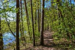 Lasowa ścieżka w lesie blisko rzeki Wiosna Ranek Cienie od drzew Fotografia Royalty Free