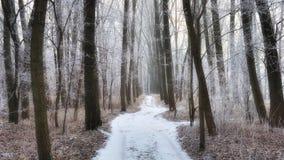 Lasowa ścieżka w zimie Fotografia Royalty Free